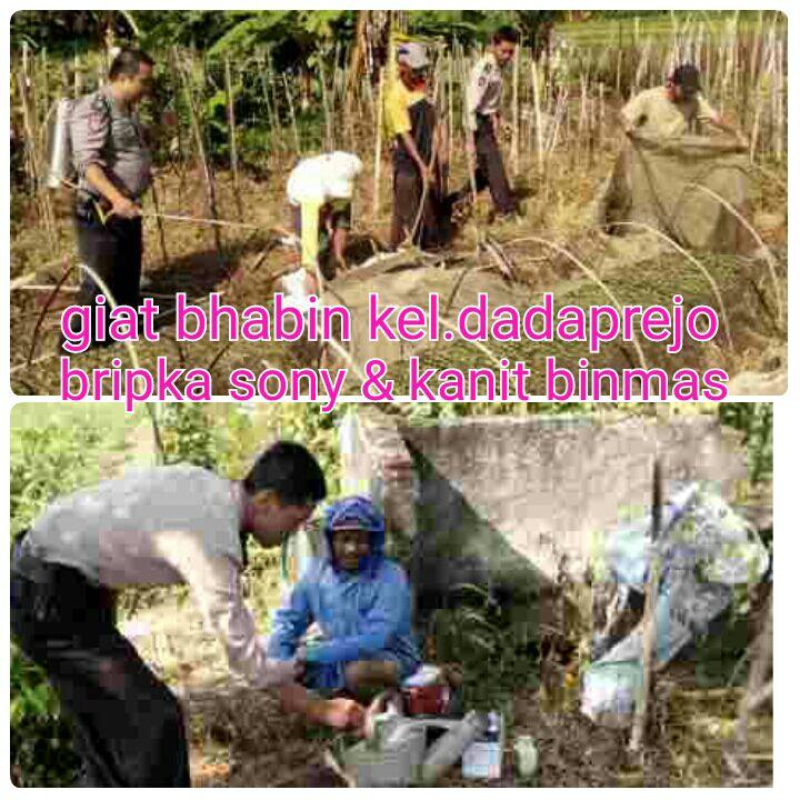 Binluh Bhabin Dadaprejo dengan petani brokoli