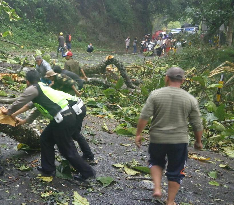 Kerja keras anggota polres Batu evakuasi pohon tumbang di jalur payung pujon