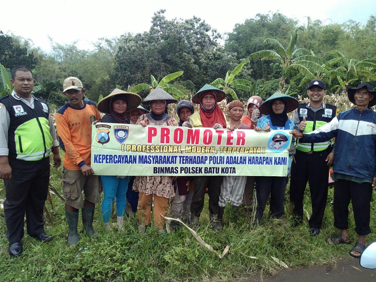 Kegiatan Promoter Binmas Polsek Batu Kota binluh kamtibmas dengan gapoktan jagung hibrida.