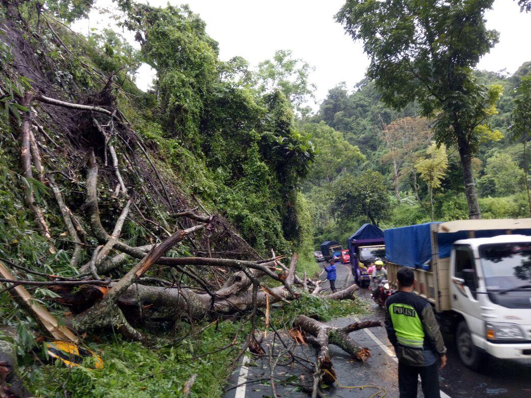 Evakuasi jalur TKP pohon tumbang di Pujon