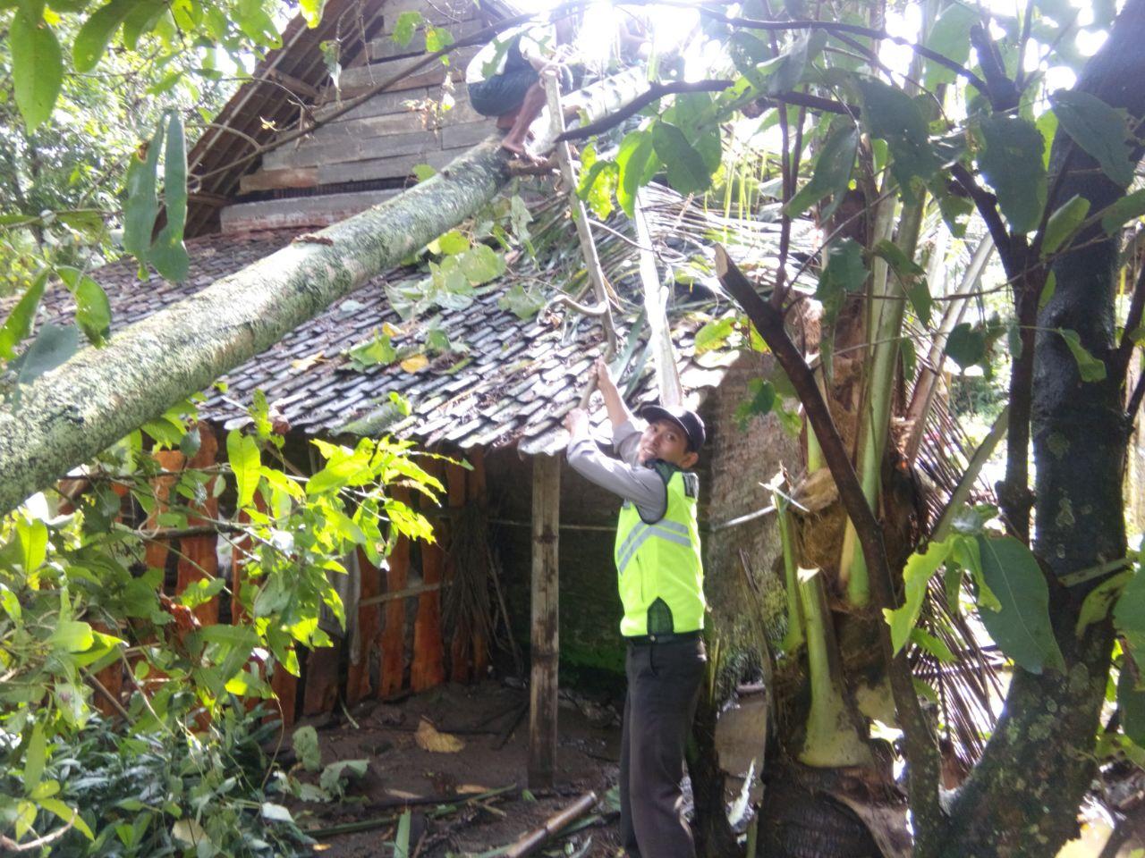 Hujan Deras di sertai angin yang mengakibatkan rumah penduduk tertimpa pohon di wilayah Kasembon Bhabinkamtibmas bantu warga
