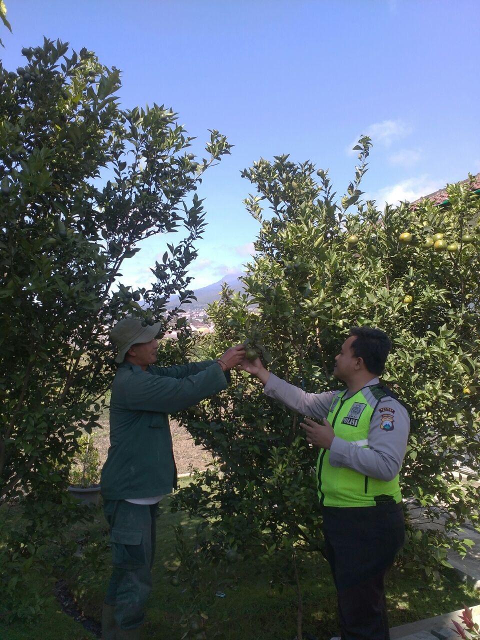 Anggota Polsek Batu Kota Polres Batu Melaksanakan Giat Sambang Perani Jeruk