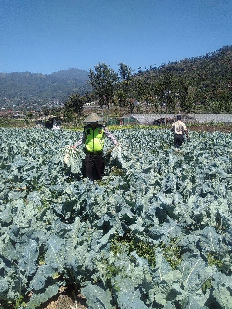 Bhabin Desa Sumberejo Polres Batu Sambangi Petani Sayur