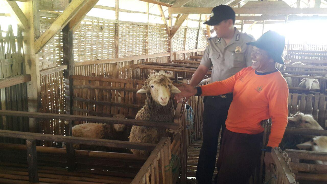 Jalin Kemitraan Bersama Kelompok Peternak Kambing, Bhabinkamtibmas Polsek Batu Polres BatuSambang Desa