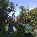 Anggota Bhabin Desa Sidomulyo Polsek Batu Polres Batu Sambang Binluh Petani Jeruk Untuk Menjaga Kamtibmas Aman Kondusif