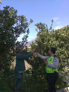 Sambang Petani Jeruk , Anggota Bhabinkamtibmas Polsek Batu Polres Batu Berikan Pesan Pesan Kamtibmas Menjaga Kamtibmas Kondusif