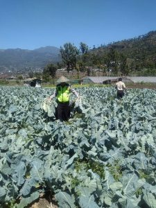 Membantu Petani Sayur, Anggota Bhabin Polsek Batu Polres Batu Giatkan Patroli
