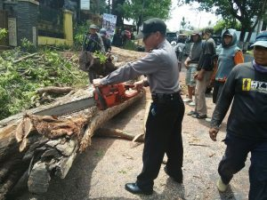 Polsek Junrejo Polres Batu Lakukan Pengamanan Penebangan Pohon di Junrejo Guna Kelancaran Arus Lalin