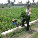Anggota Binmas Polsek Junrejo Polres Batu Mengunjungi Para Petani di Desa Binaan