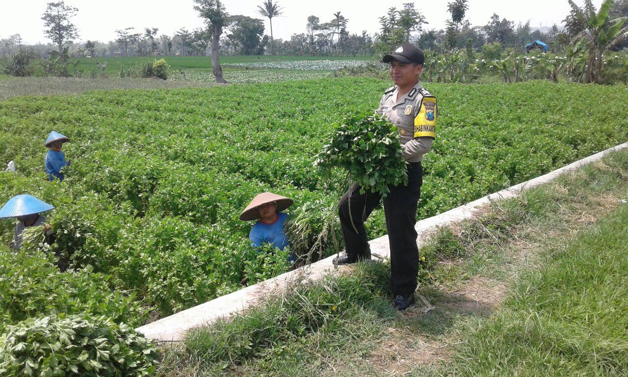 Anggota Binmas Polsek Junrejo Polres Batu Turut Kunjungi Para Petani di Desa Binaan