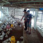 Anggota Bhabin Polsek Batu Polres Batu Patroli Menjaga Kemitraan Dengan Peternak Ayam