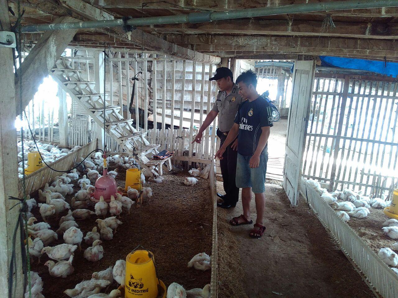 Menjaga Keamanan Wilayah, Anggota Bhabin Polsek Batu Polres Batu Patroli Sambang Peternak Ayam Menjalin Sinergitas