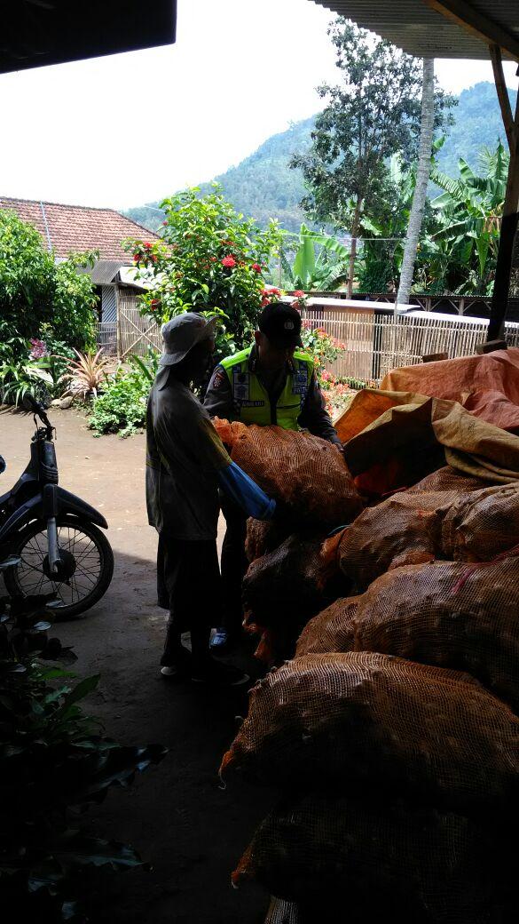 Bhabin Polsek Ngantang Polres Batu Membantu Petani Panen Jahe sambil Menyampaikan Pesan Kamtibmas