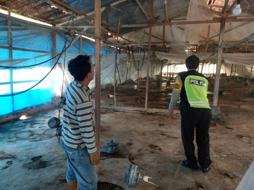 Bhabin Polsek Batu Polres Batu Memberikan Pembinaan Peternak Ayam Sampaikan Kamtibmas