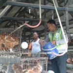 Bhabinkamtibmas Polsek Kasembon Polres Batu Giat Sambang ke Peternakan Ayam
