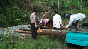 Para Anggota Bhabin Polsek Batu Kota Polres Batu Melaksanakan Giat Pemotongan Pohon Dekat Pemukiman Warga