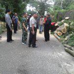 Kapolsek Junrejo Polres Batu Bersama 3 Pilar Amankan TKP Pohon Tumbang Jalan Diponegoro