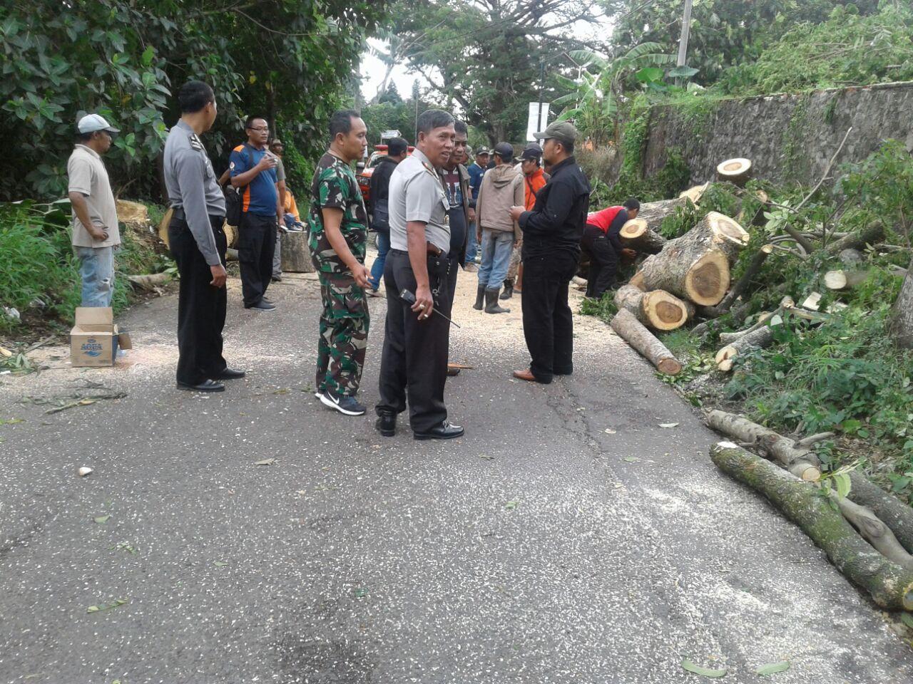Kapolsek Junrejo AKP Sigalingging Polres Batu Bersama 3 Pilar Lakukan Pengamanan TKP Pohon Tumbangdijalan Diponegoro, Desa Junrejo