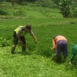 menjalin kedekatan dengan masyarakat , Bhabinkamtibmas Polsek Bumiaji Polres Batu patroli dan dialogis petani