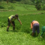 Giat Patroli Sambang, Anggota Bhabinkamtibmas Polsek Bumiaji Polres Batu lebih Dekat Dengan Masyarakat Membantu Panen