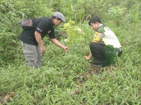 Kegiatan Penghijauan Bhabin Desa Pesanggrahan Polsek Batu Polres Batu di Lereng gunung panderman