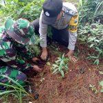 Anggota Polsek Batu Polres Batu Dengan TNI Giatkan Pelestarian Hutan Coban Rais Kota Batu