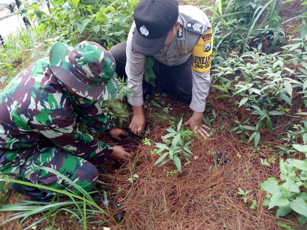 Anggota Bhabin Polsek Batu Kota Polres Batu Melaksanakan Pelestarian Hutan Bersama 3 Pilar di Coban Rais Kota Wisata Batu