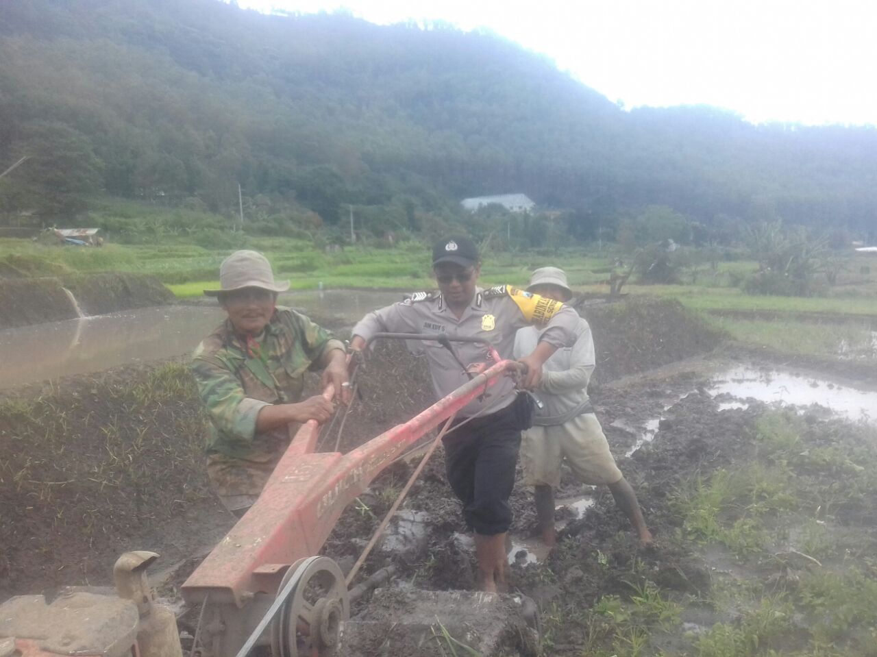 Sambang Petani Padi Anggota Bhabinkamtibmas Polsek Batu Polres Batu Membantu Membajak Sawah