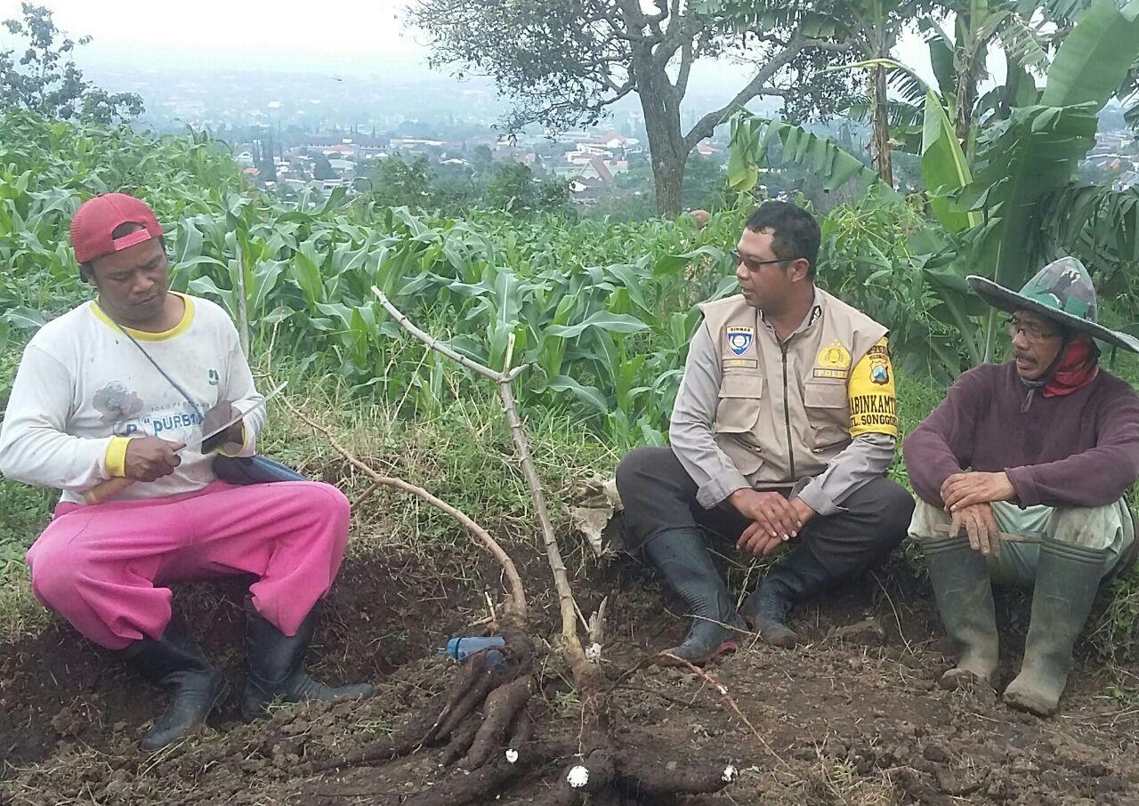 Bhabin Polsek Batu Kota Polres Batu Giatkan Sosialisasi Untuk Kerukunan Tani