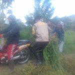 Kegiatan Kunjungan Bhabinkamtibmas Polsek Batu Polres Batu Yang Membantu Petani Desa