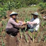 Jalin Kedekatan Satgas Kemitraan Bhabin Kel.Songgokerto Polsek Batu Kota Polres Batu Berdayakan Warga Untuk Tanam Sayur Organik