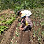 Satgas Kemitraan Bhabinkamtibmas Songgokerto Polsek Batu Polres Batu Berdayakan Warga Tanam Sayur Organik