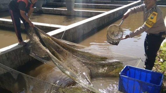 Bhabin Kelurahan Songgokerto Polsek Batu Kota Polres Batu Kunjungi Potensi Perikanan