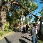 Bhabinkamtibmas Kel. Songgokerto Polsek Batu Kota Bantu Evakuasi Pohon Tumbng ditengah jalan