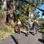 Bhabinkamtibmas Kelurahan Songgokerto Polsek Batu Kota Polres Batu Bantu Evakuasi Pohon Tumbang