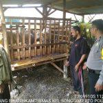 Bhabinkamtibmas Kelurahan Songgokerto Polsek Batu Kota Polres Batu Sambang Desa Kunjungan Potensi Peternakan