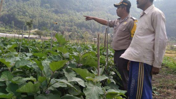 Bhabinkamtibmas Kelurahan Songgokerto Polsek Batu Kota Kunjungin Pemberdayaan Potensi Masyarakat Tani
