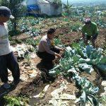 Giat Sambang Kamtibmas, Bhabinkamtibmas Kelurahan Sisir Polsek Batu Kota Lakukan Blusukan Kamtibmas Kepada Petani Jalin Kedekatan