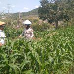 Sinergi Masyarakat Tani Bhabinkamtibmas Desa Pesanggrahaan Polsek Batu Kota Polres Batu