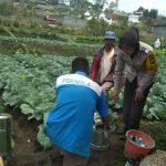 Giat Sinergi Masyarakat Tani Bhabinkamtibmas Desa Pesanggrahaan Polsek Batu Polres Batu Titipkan Pesan Kamtibmas