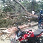 Polres Batu Dengan Sigap Menangani Pohon Tumbang di Beru Bumiaji