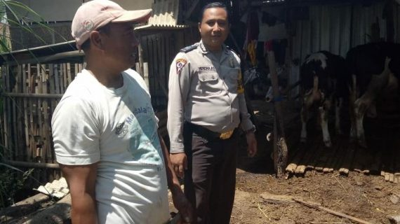 Pelaksanaan Giat Sambang Pagi Kunjungan Potensi Ternak Bhabin Desa Oro Oro Ombo Polsek Batu Polres Batu Sampaikan Pesan Kamtibmas