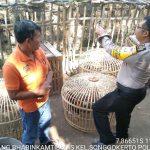 Giat Sambang Siang Kunjungan Potensi Ternak Ayam Bhabinkamtibmas Songgokerto Polsek Batu Polres Batu Sampaikan Pesan Kamtibmasdengan penuh semangat