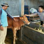 Giat Sambang Desa Kunjungan Potensi Peternakan Bhabinkamtibmas Kelurahan Sisir Polsek Batu Kota Polres Batu