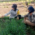 Patroli Bhabinkamtibmas Pesanggrahan Polsek Batu Kota Polres Batu Bersinergi Dengan Masyarakat Tani