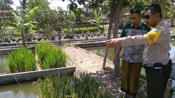 Anggota Bhabinkamtibmas Tatap Muka Dengan Warga, Sambang Warga Bhabinkamtibmas Songgokerto Polsek Batu Pengolahan Padi Apung