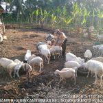 Sambang Sore Potensi Ternak Bhabinkamtibmas Kelurahan Songgokerto Polsek Batu