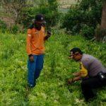 Kegiatan Sambang Dan Silaturahmi Kamtibmas dan Giat Blusukan Kamtibmas Kepada Petani Sayur Bhabinkamtibmas Kelurahan Temas Polsek Batu  