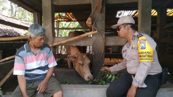 Upayakan Preventif Gaet Mitra Dengan Masyarakat, Sambang Silaturahmi Kamtibmas Potensi Ternak Bhabin Kelurahan Songgokerto Polsek Batu Sampaikan Pesan Kamtibmas