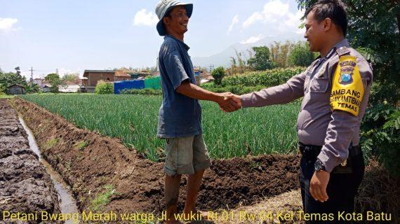 Guna Menjalin Kedekatan Dengan Warga Binaan, Anggota Bhabinkamtibmas Kelurahan Temas Polsek Batu Kota Sambang Petani Bawang Merah